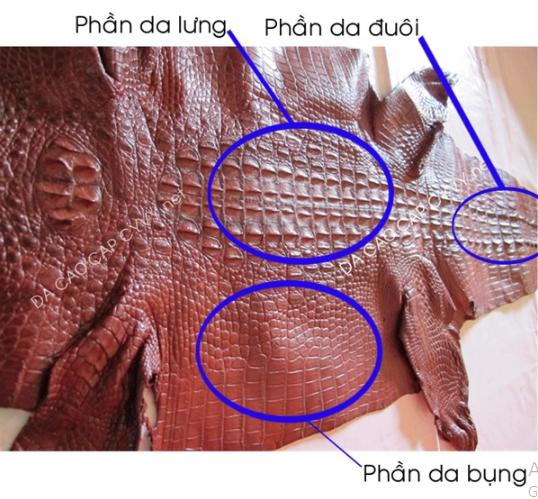 Xác định phần da để làm ví handmade cá sấu